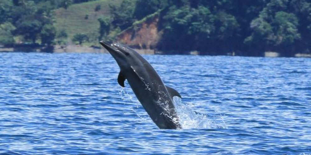 dolphin-watching-mangrove-snorkeling-tour-at-golfo-dulce-in-the-in-golfito-468951-o3rlasn4sgwr31kfuv7oh6qadx8vfg1dhkchgd0j2g